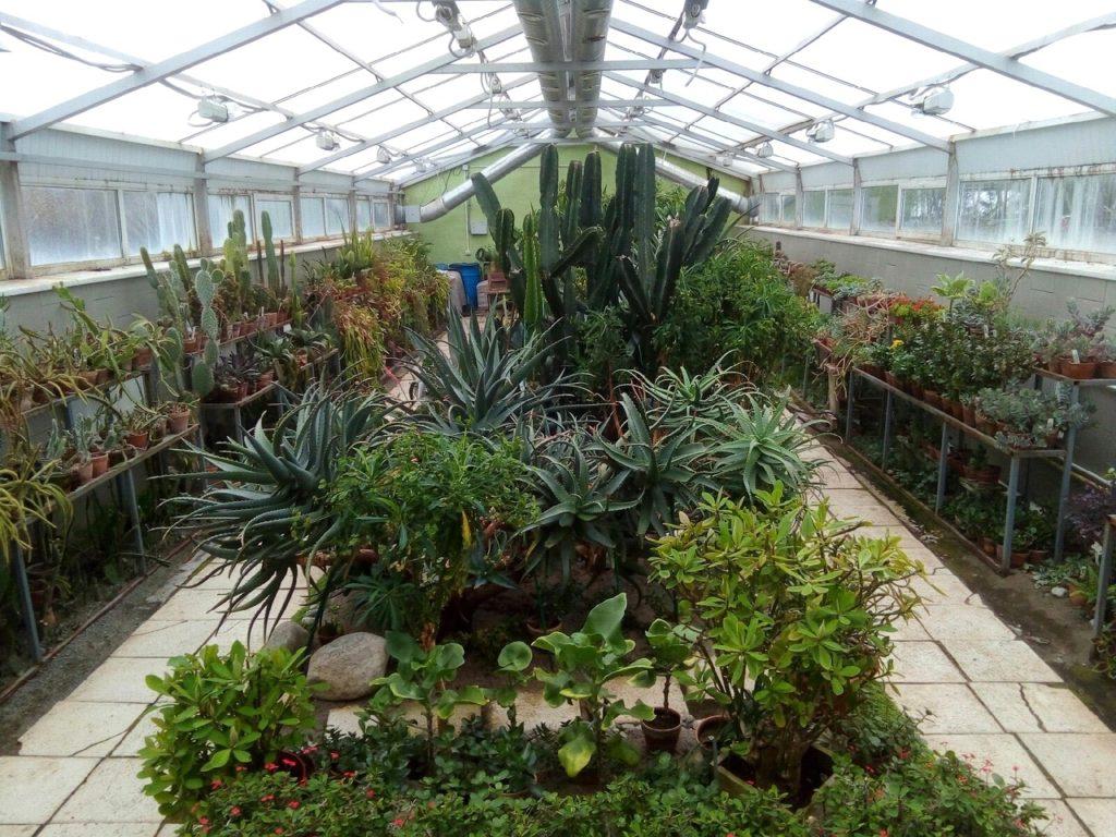 БАРЕНС Ботанический сад